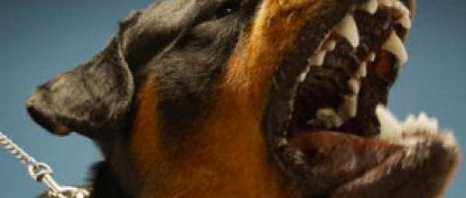 chien méchant